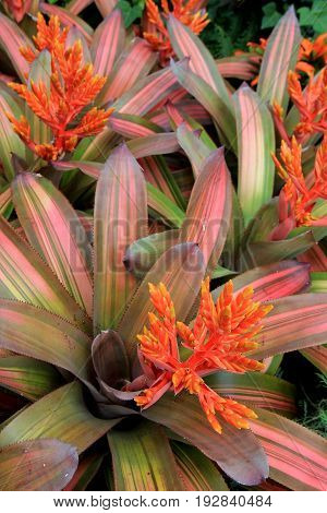 Vertical image of bright and colorful flowers and plants that have healthy  striped leaves in tropical garden.