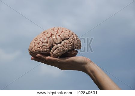 A hand holding the artifical human brain model with blue sky in the background