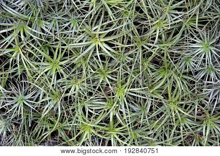 Horizontal image of background in ground cover of healthy green plants
