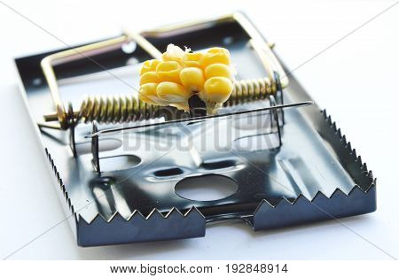 black iron rat trap bait by corn seed on white background