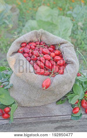 Rose Hip Fruit In A Burlap Bag Over A Wooden Background