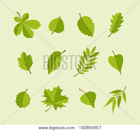 Types of Leaves - modern vector flat design icons set. A big variety from different trees. Use these high quality icons to decorate your postcards, banners, flyers, illustrations and presentations.