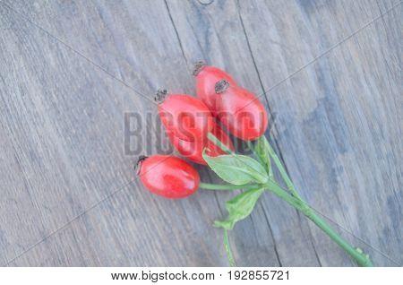 Dog Rose On Brown Wooden  Background