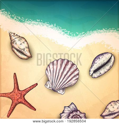 Seashells and starfish on the beach. Vector illustration, all elements are isolated and easy to edit.