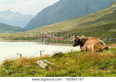 Train at the lake of Ospizio Bernina on the Swiss alps