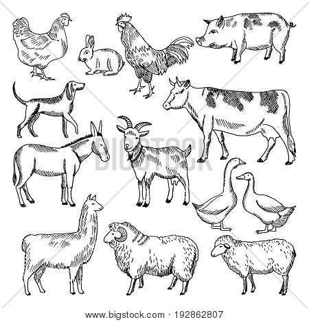 Vintage farm animals. Farming illustration in hand drawn style. Animal farming sketch drawing chicken and goose, hog and rooster vector