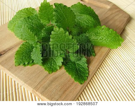 Bunch of lemon balm with green leaves, Melissa officinalis