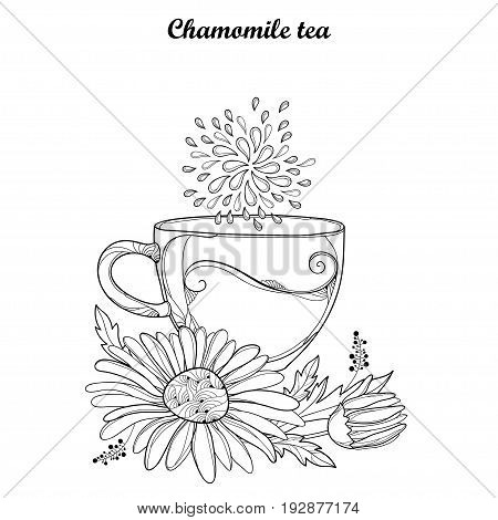 Vector cup of Chamomile herbal tea isolated on white background. Outline Chamomile flower and ornate petal in contour style for summer design, medicine, naturopathy, homeopathy, coloring book.