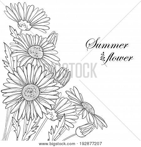 Vector bouquet with outline Chamomile flowers, bud and leaf isolated on white background. Ornate floral in contour style for summer design and coloring book. Corner composition with Chamomiles.