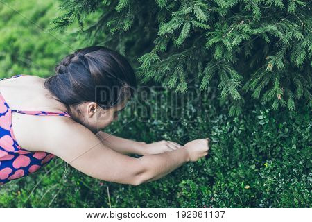 Young woman picking berries in carpathian mountains