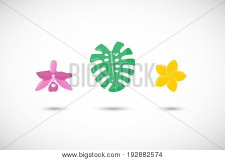 Tropical plants vector flat icons set Flat design of orchid monstera leaf and plumeria flower with round shadow isolated on the white background vector illustration