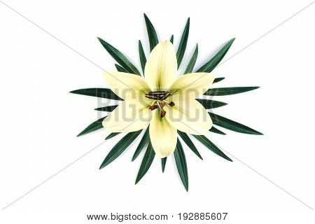 Beautiful big white lily with leaves isolated on a white background. Flat lay style.