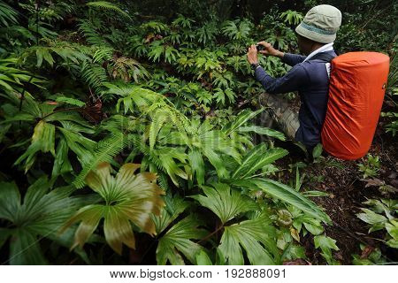 more species fern at tropical rainforest canopy at southern of Thailand