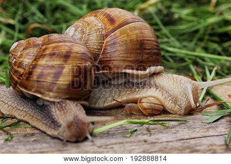 Snail Family .mother Snail Hug A Little Snail And Father Snail.analogy.concept Of Family