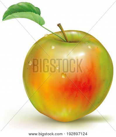Realistic vector illustration of yellow green apple on white background
