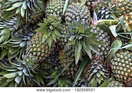 A bunch of fresh pineapple on the store counter
