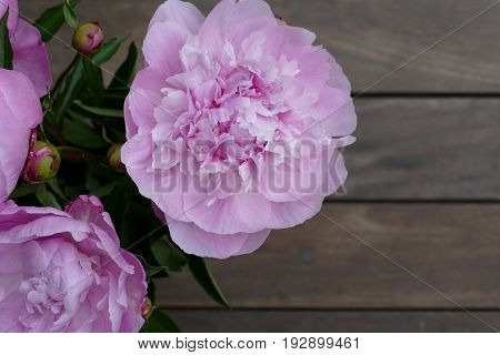 pink flower with a purple hart inside
