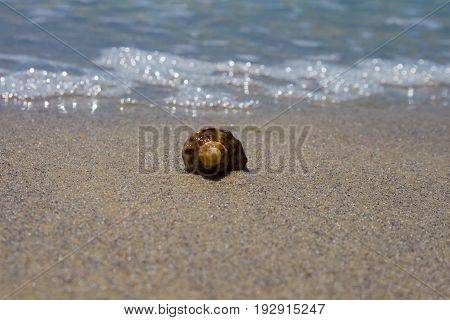 A shell in the sand on the beach. Close-up. Against the background of the water. Front view