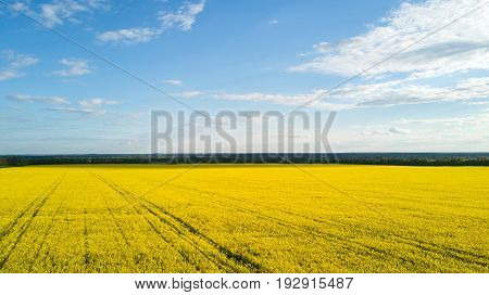 Field with blooming Canola in spring - Aerial photo