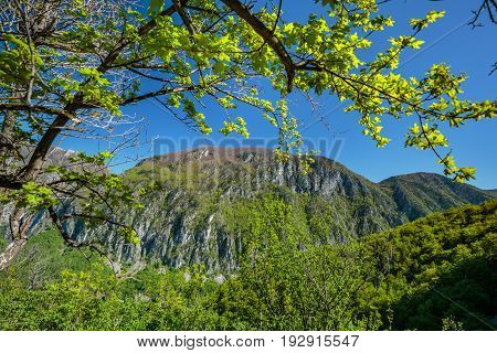Summer landscape with mountains covered in forests