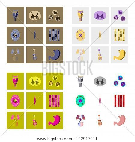 icons set in flat style human biology