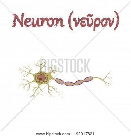 human organ icon in flat style neuron