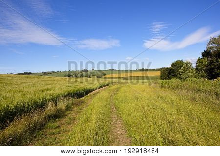 Grass Track And Barley