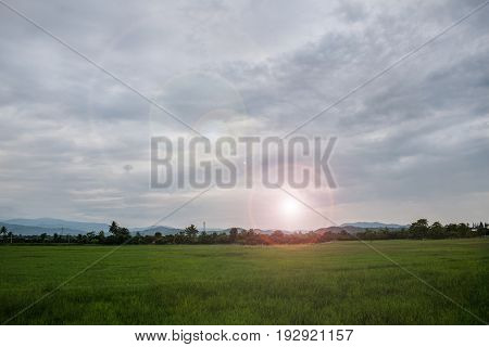 Green fields At sunset, the sun will be hinted at the beautiful sky.