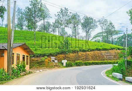 Rothschild Tea Estate In Pusselawa