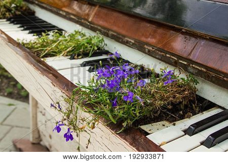 The Old White Piano With Flowers On The Street.