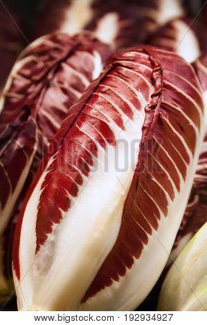 Red Radicchio Rosso di Treviso, close-up vegetable