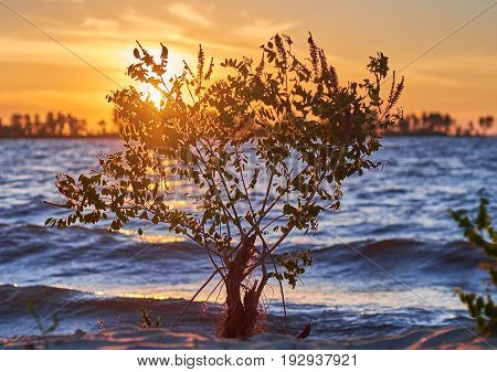 Young growing tree on the bank of the river with blazing rising sun on the background