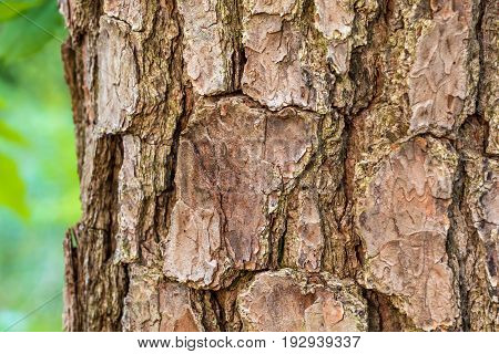A close up of a light brown tree trunk