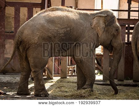 Big elephant in a park in the nature .
