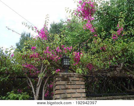 nature gentle morning bright flowers Красивая природа нежное утро яркие цветы