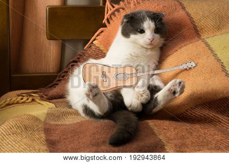 Cat with miniature guitar is sitting on the bed