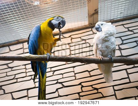 Two parrots sit on a branch in the zoo .