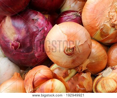 Background Of Red And White Onions