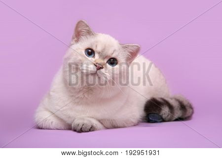 A cute cat with blue eyes lies on a pink background.