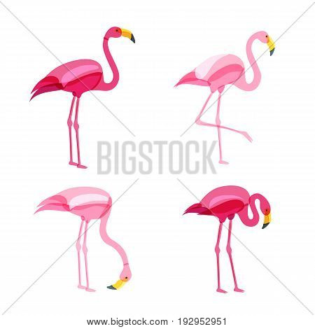 Pink Flamingo Set Isolated On White Background. Vector Hand Drawn Doodle Illustration.