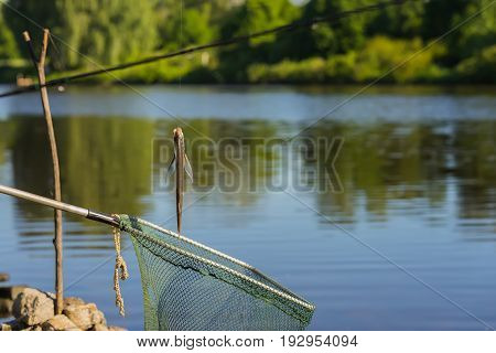 Just caught fish sabrefish hanging on a hook on fishing with Fishing net in the background of natural landscape of water and forests. With place for your text, for background use.