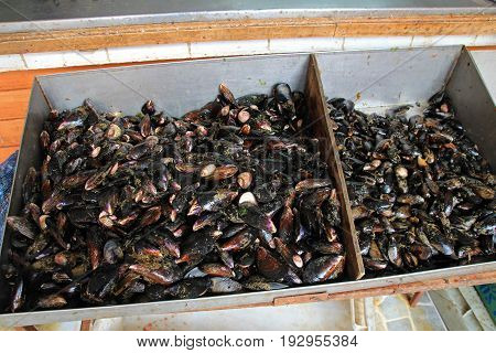 Mussels on the market in Ancud, Chiloe Island, Chile, South America