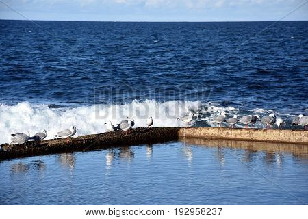 Outdoor rock swimming pool with seagulls at Dee Why beach (Sydney NSW Australia)