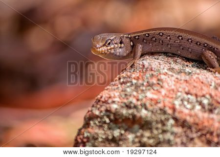 a lizard stands on a rock with a hellish red background and looks back over its shoulder at the camera,