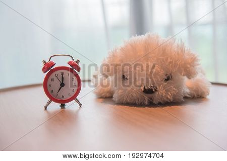a alarm clock with cute white dog  doll on the wooden table and white curtains in the morning .