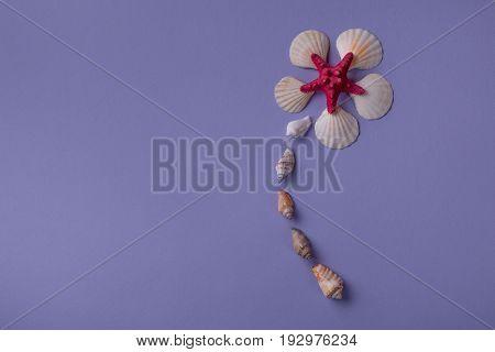 Flower Arranged From Seashells