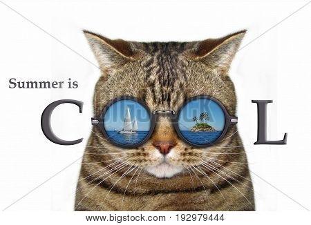 There is the cool reflection in cat's glasses. White background.