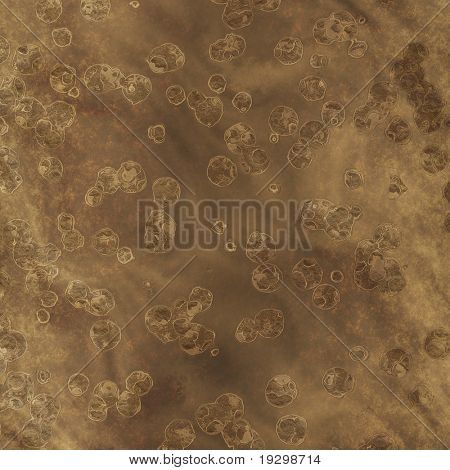 image of lots of cells as fossils in rock