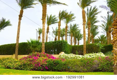 Sharm El Sheikh, Egypt - April 11, 2017: The main entrance and park area at Hotel Four Seasons Resort Sharm El Sheikh, Egypt on April 11, 2017