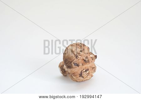 Isolated Shiitake black mushroom on white background